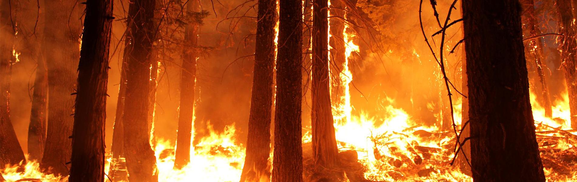 Imagem: detalhe de floresta pegando fogo
