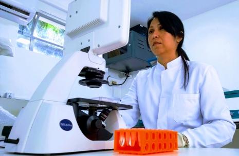 Os pesticidas utilizados na pesquisa têm aplicação oficial na produção nacional.