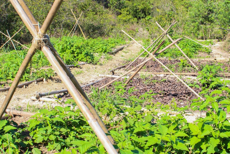 Reflorestamento do Morro do Gragoatá