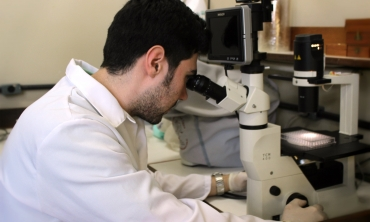 Pesquisadores realizam testes com a quinidina, fármaco já utilizado para tratar a malária.